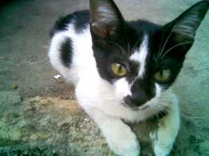 Lucu kaya gambar kucing di kertas binder judulnya bon bon cat