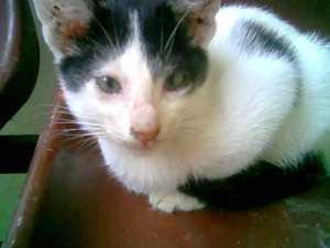 Ini kucingku dirumah dah mati tapi hiks hiks