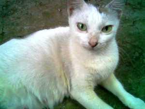 Emak kucing neh,gendut dan jinak, dah berapa kali beranak ya?