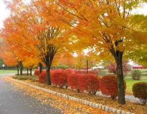 New Jersey Autumn