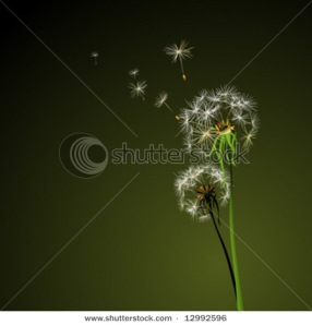 Two dandelions in wind