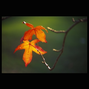 2-autumn-leaves