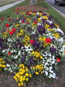 Taman bunga mekar di tepi jalan
