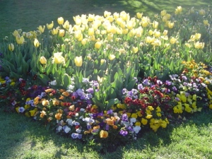 Mittagong spring flowers