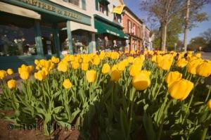 Niagara spring flowers