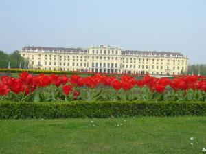 Spring time at Schonbrunn