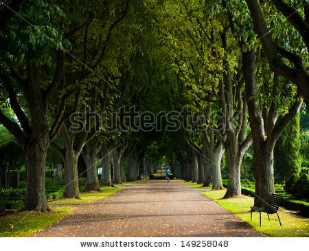 Alley of trees on the graveyard lund Sweden